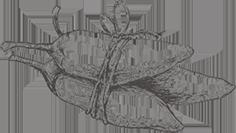 Ilustración en blanco y negro de pimienta